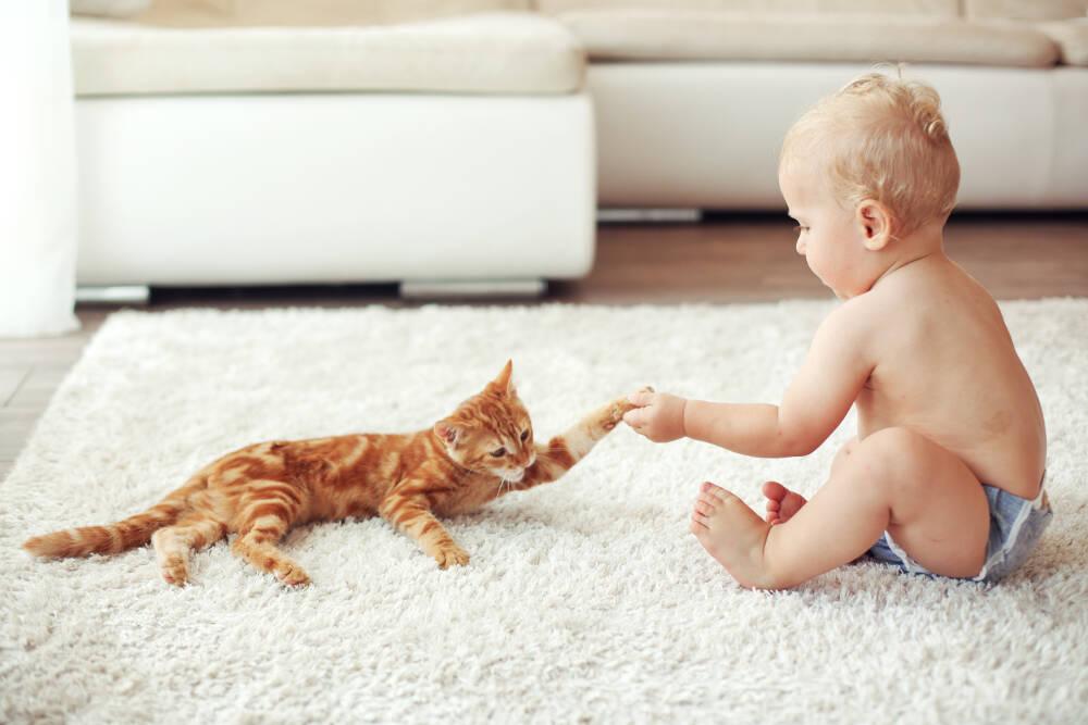 Carpet Odour Control