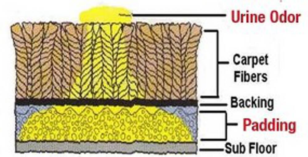 Carpet Odour Control (2)