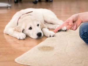 Carpet Odour Control London (3)