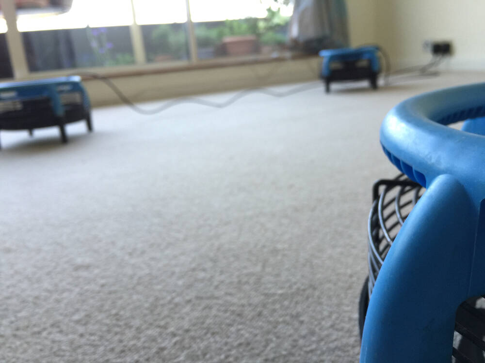 Professional Carpet Cleaner London