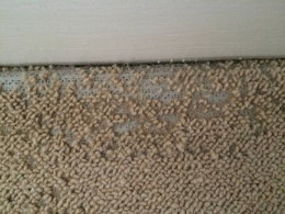 Carpet Moth Control London